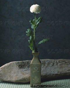 chrysanthemeikebanau12914126.jpg