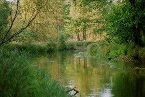 De la douceur à la furie,  dans Mes envies de dire, 238221-calme-riviere-foret-300x200