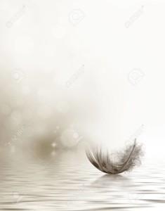 23289445-condolencias-o-diseño-simpatía-con-una-pluma-flotando-en-el-agua