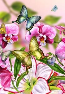 papillon fleur amour